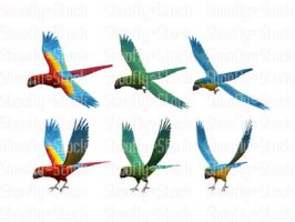 Macaw Stock Pack by Shoofly-Stock