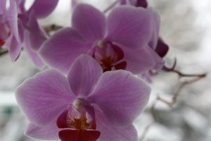 Lonely Orchids by LisaMacNewton