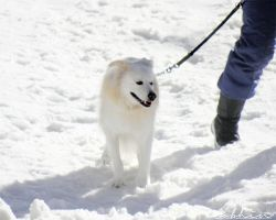 Dog on the snow I by YourLittleBunny