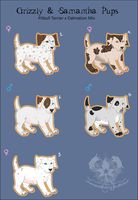 DalmationxPitbull Mix Adopts by AutumnStarLightRanch