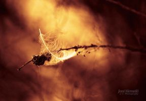 Burning Feather by JoniNiemela