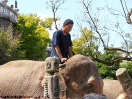 Asian Elephant and Rider by Xantaria