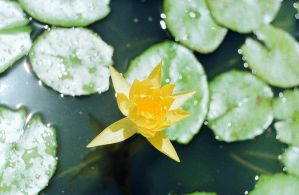zenit-11..water lily by InjectedSmiles