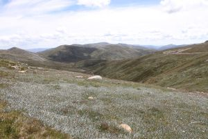 Mount Kosciuszko 7 by SolEquus-Stock