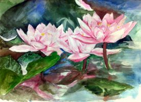 'beautiful water lilies' by AygulBaghirovA