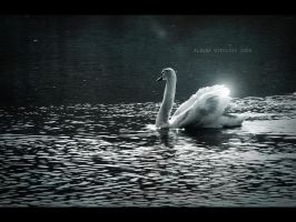 Swan by Alharaca