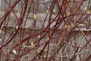 Branches 002 by MonsterBrand-stock