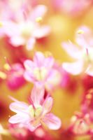 engagement flowers2 by MtlcQatar