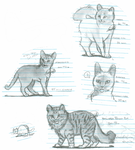 Cat Practice #1 by Catacyt