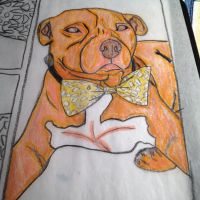 Pit Bull Drawing by EJJetsetter