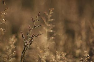 grasses again by nbd12