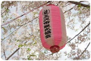 Cherry Blossoms 8 by moofestgirl
