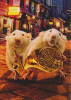 dumbo band rats by HER13