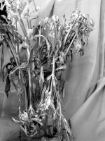 black and white of vase by FroggieFaith