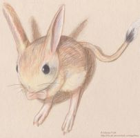 Jerboa by iduck