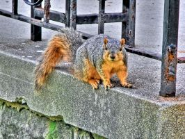 Squirrel -hdr- by tripptaylor
