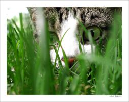 stalking by gizmocrat