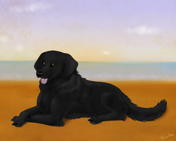 Labraderp by xCoyote