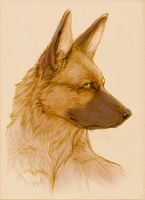 portrait german shepherd by Chaosthief