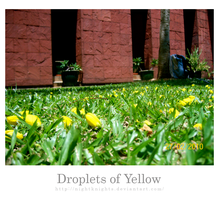 Droplets of Yellow by nightknights