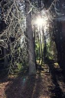 As the light shines in. by Emariee08