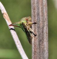 Thorn Treehopper by craftworker