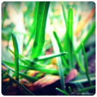Grass. by ForgottonPhotography