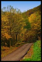 Autumn road by SenicaG