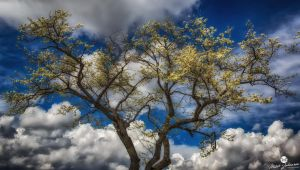 Spring Blossoms HDR Glow by mjohanson