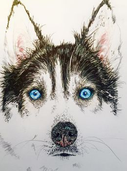 blue eyed Husky with fineliner by smallbird101