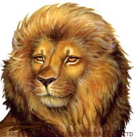 Queen of Sheba Lion by Elf_Fin by Jozef-Szekeres