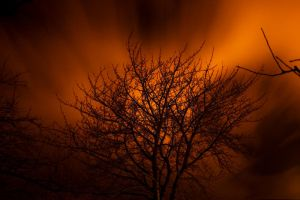In Flames by King-Madness