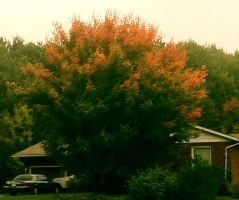 Autumn Explosion by dlighted