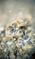 Bee-ing on this river by KosmioS