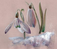 Perce-neige by UnAutreLapin