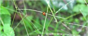 The Lady bug with LOVE by 071191