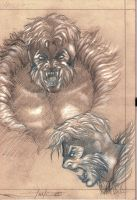 sabretooth study by LucaStrati