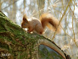 squirrel by k-a-d-a-t-h