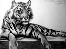 Tiger Drawing by artistelllie