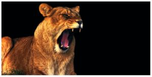 African Lioness by Kem2000