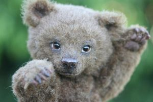 Grizzly Bear Cub by kimbearlys