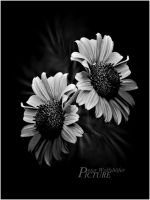 Black and Withe by PEWOB