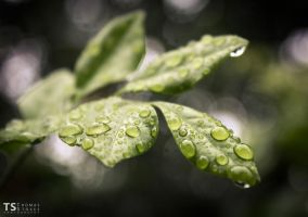 Droplets by Tom-Stokes