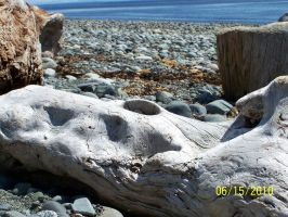 driftwood at the lighthouse by rubies52