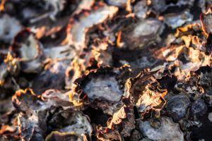 Oysters Basking in the Sun by ecr8on