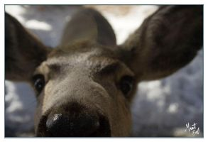 Curious Deer by grant-erb