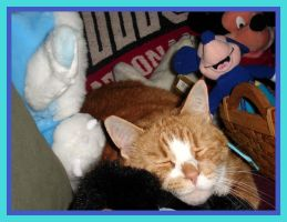 Simba Sleeps with the Stuffies by WDWParksGal