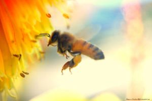Bee and Yellow-Orange Flower by Creative-Addict
