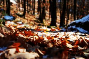 Cold Forest by kralis-dm