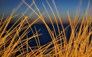 Grass of Sylt by N3xx89